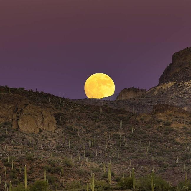 canna_solar_moon